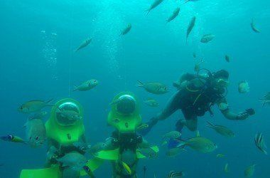 aquafari-image-1jpg.jpg