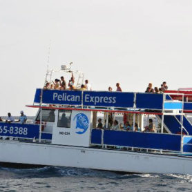 Local fishing adventure with Pelican Boat Tours Curacao