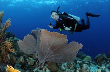 img3-ocean-encounters.jpg