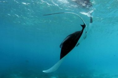 Caribbean-Sea-Sports-Curacao-diving-underwater