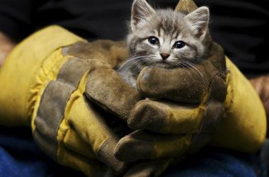 animal-rescue