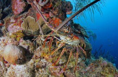 dive-CTB-kathys-paradise.jpg