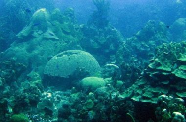 dive-mushroom-forest.jpg