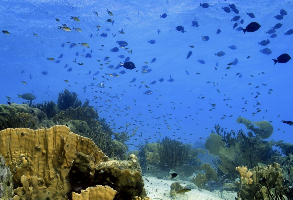 duiken-curacao-padi-04