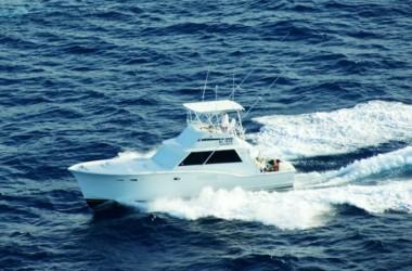 fish-curacao-730-width