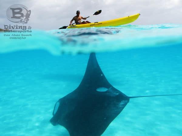 Rent SUP's & Kayaks @ Cas AbouRent SUP's & Kayaks @ Cas AbouRent SUP's & Kayaks @ Cas AbouRent SUP's & Kayaks @ Cas Abou