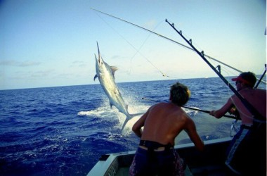 img-bounty-adventures-deepsea-fishing