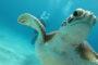 Bahia Diving