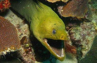 img-snake-bay-divespot.jpg