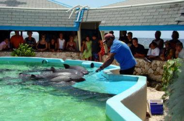 sea-aquarium-730-width