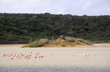 Sint Willibrodrus and its Flamingos